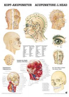 Kopfakupunktur Poster 24cm x 34cm