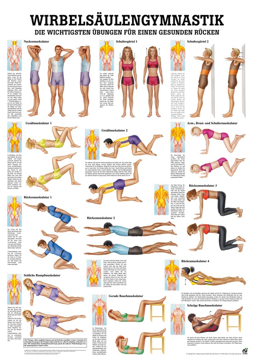 Wirbelsäulengymnastik im YOGISTAR.COM kaufen   Yoga-Zubehör ...