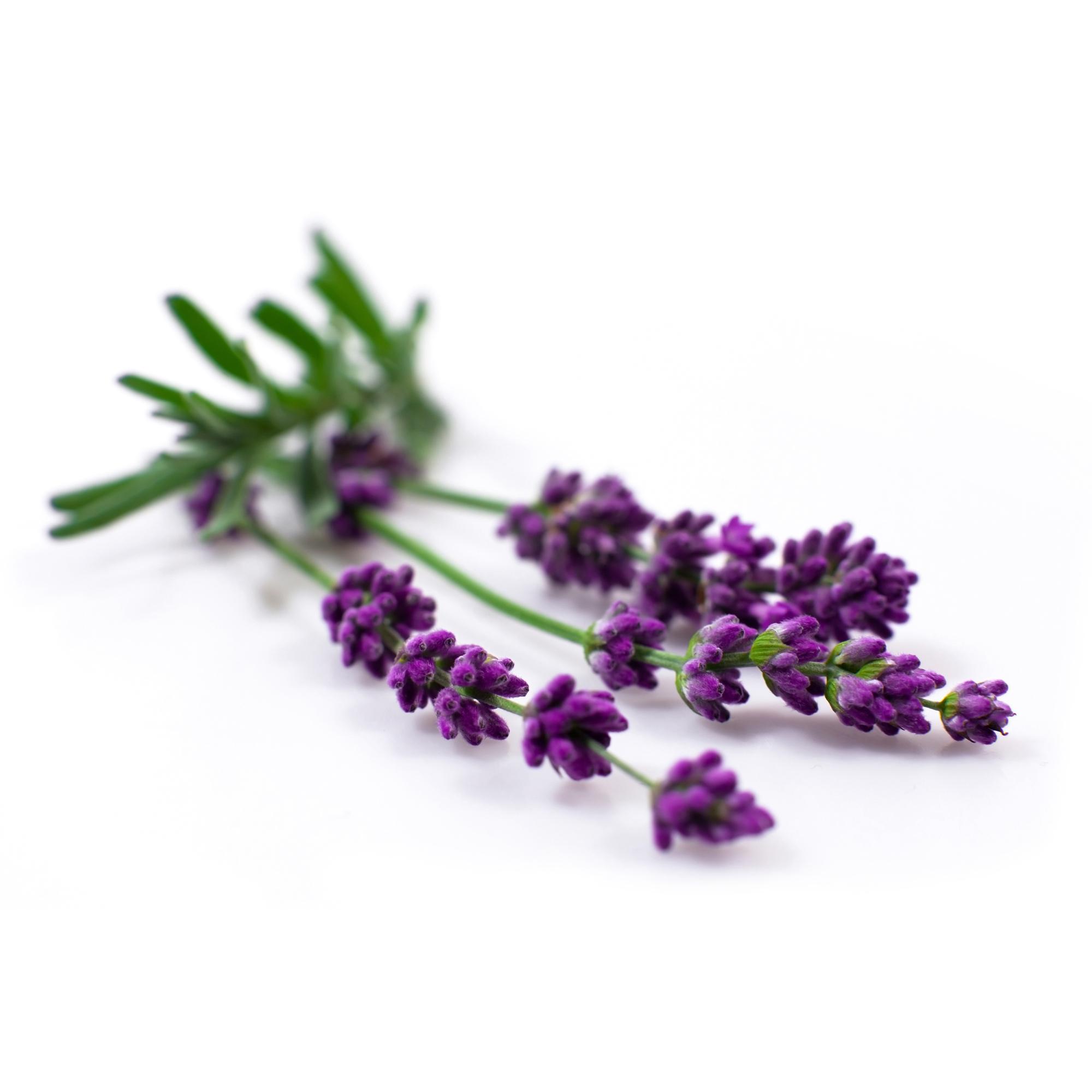 Bio Yoga mat cleaner - fresh lavender - 50 ml